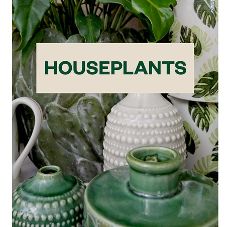 Sunshine's Houseplants